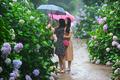 '비 오는 날, 수국 즐겨요'