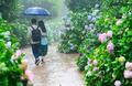 비 오는 날의 수채화