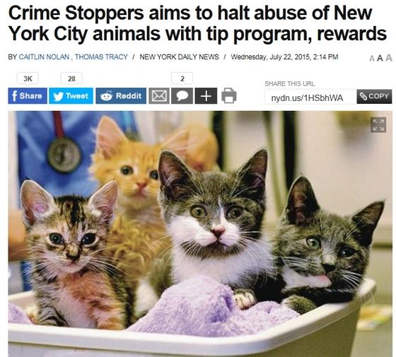 美 뉴욕시, 동물학대 신고 핫라인 개설…신고 포상금 최대 2500달러