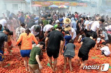 화천 토마토축제 '사람 반 토마토 반'