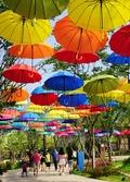 예쁜 우산의 거리
