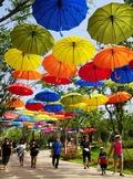 우산거리를 거닐며 여름나기