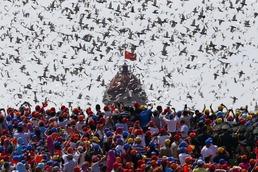 텐안먼 광장의 비둘기