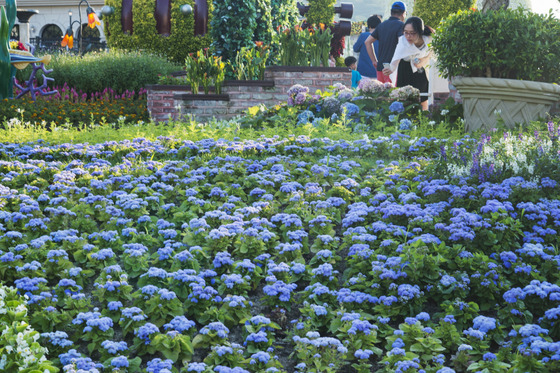 푸른바다 컨셉 정원 조성… 라벤더, 샐비어 등 여름꽃 연출