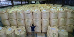 쌀소비 반토막...넘치는 쌀