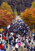 북적이는 이천 쌀 문화축제