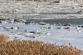 한파로 얼어버린 한강