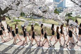 벚꽃 세상