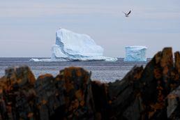 캐나다 해안가에 떠내려온 거대 빙하