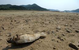 봄 가뭄에 속타는 '농심'…강수량 반토막 비상
