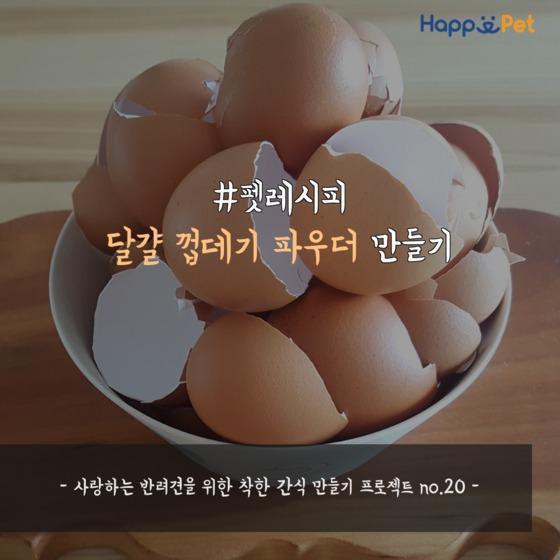 [펫레시피] 달걀 껍데기 파우더 만들기