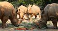 세계 코뿔소의 날...'우리도 사랑 받고 싶어요'