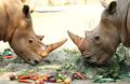 오늘은 세계 코뿔소의 날