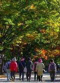 '깊어가는 가을 산책'