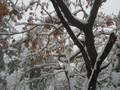 올 겨울 첫눈 쌓인 설악산