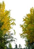 '가을 풍경'