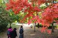 가을을 걷는 시민들