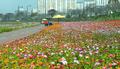 겨울 문턱에도 꽃으로 물든 장성 황룡강