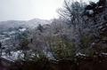 봄에 만나는 하얀 풍경