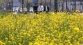 화창한 봄 날씨