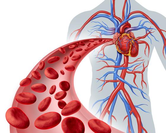 폭염 속 혈관장애 경계경보…혈액순환에 좋은 음식은?