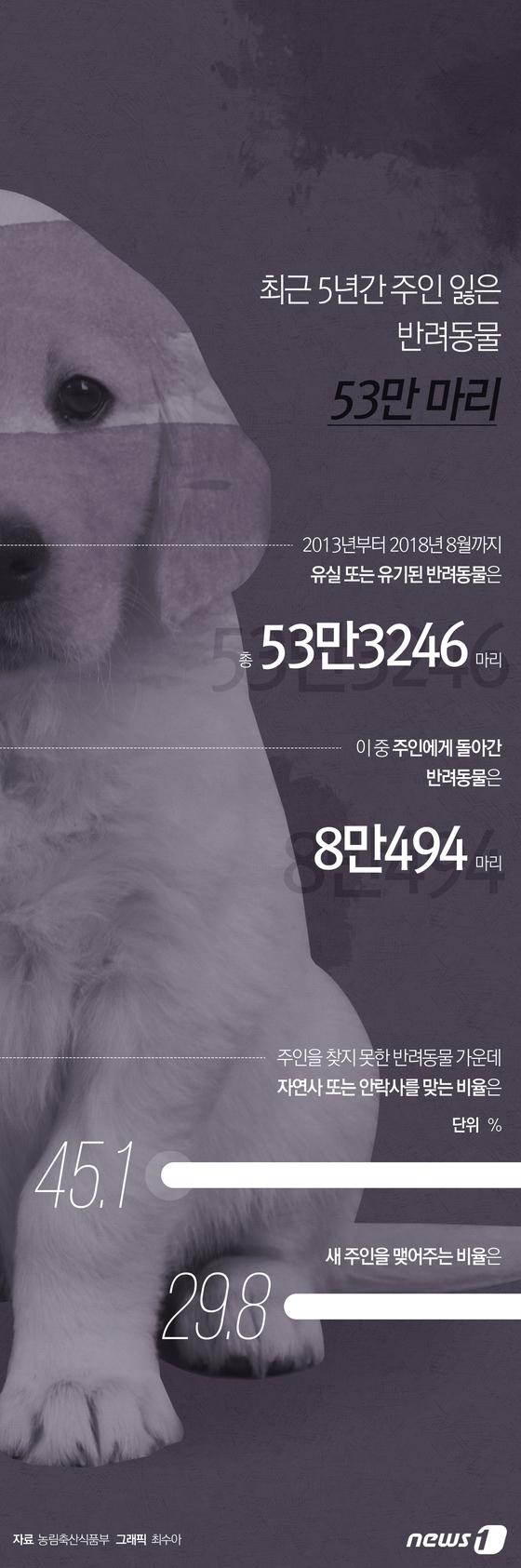 [그래픽뉴스] 최근 5년간 주인 잃은 반려동물 53만 마리