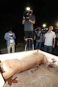 대전 동물원 탈출한 퓨마 엽사에 의해 사살