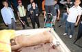 동물원 탈출한 퓨마 4시간반만에 사살