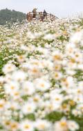 꽃동산에 올라 만끽하는 가을