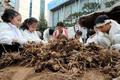 어린이 농부들의 '도심 속 가을걷이'