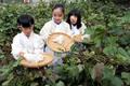목화 수확하는 어린이 농부들