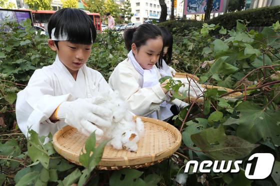 어린이 농부들의 목화 수확