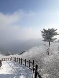 태백산 겨울왕국