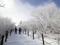 태백산 겨울산행 추억