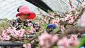 '복사꽃에서 들리는 봄이 오는 소리'