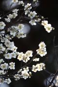 봄과 함께 찾아온 매화