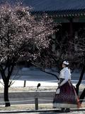 '아름다운 봄 빛'