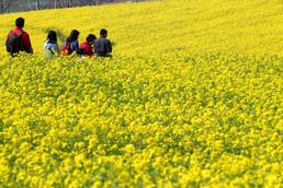 노란 유채꽃과 함께