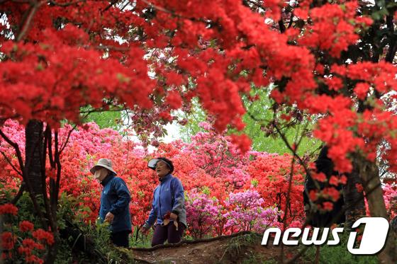 울글불긋 철쭉으로 물든 완산공원 꽃동산