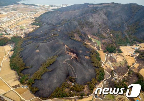산불에 초토화된 우리 산림