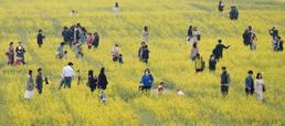 봄꽃의 향연