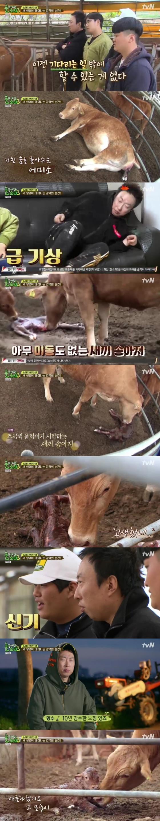 """'풀뜯소3' 송아지 탄생이 준 감동..박명수 """"아름다운 모습""""(종합)"""