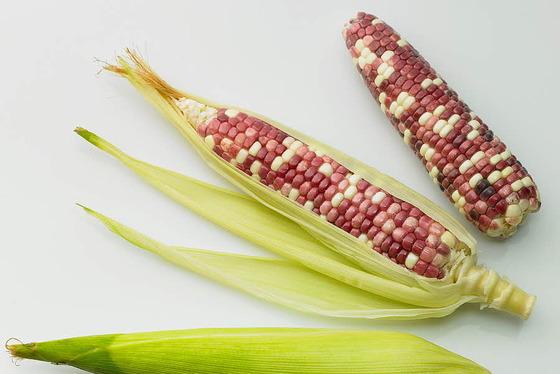 옥수수 수염·옥수수 속대 버리지 마세요