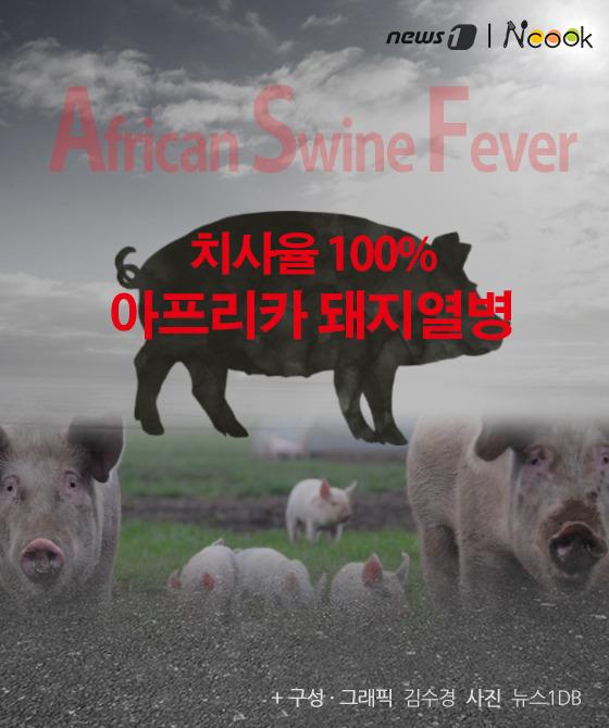 [카드뉴스] '삼겹살 가격 급등' 아프리카 돼지열병이 뭐길래…
