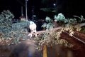 도로에 쓰러진 나무 제거하는 소방