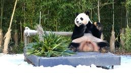 동물원의 동물친구들, 겨울나기 어떤모습?