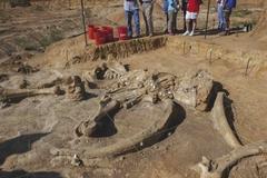 4만년전 매머드의 환생