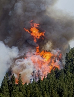 캘리포니아 숲을 초토화한 거대 불기둥