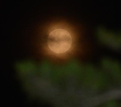 블루문 '푸른 달이 아닙니다'