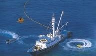 참치‧오징어 등 원양수산물 견인…수산물 수출 17.4억달러, 전년비 17.6%↑